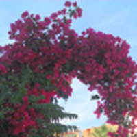 Hairdresser for October wedding